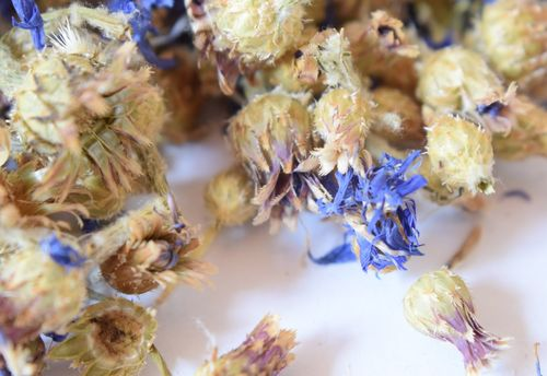 Whole dried cornflower heads blue seconds