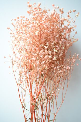 Gypsophila dried flower bunch dyed pink Seconds