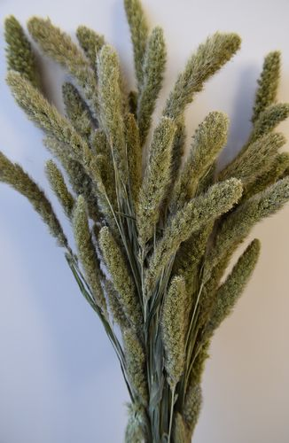 Setaria dried grass bunch natural green wholesale