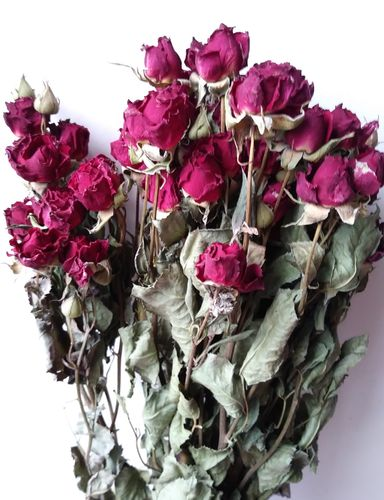 Dried rose flower bunches dark red wholesale