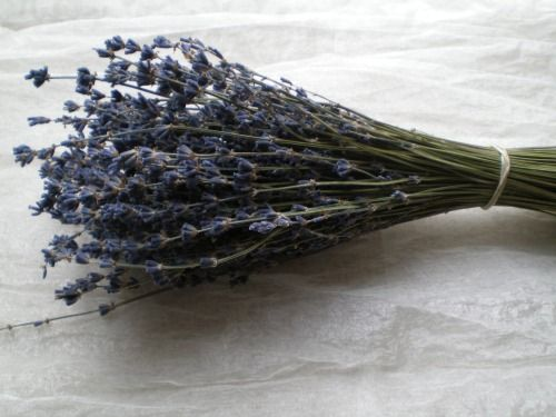 Blue dried lavender bunch bundle offer three pack