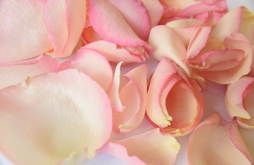 Freeze dried rose petals ivory pink - litre