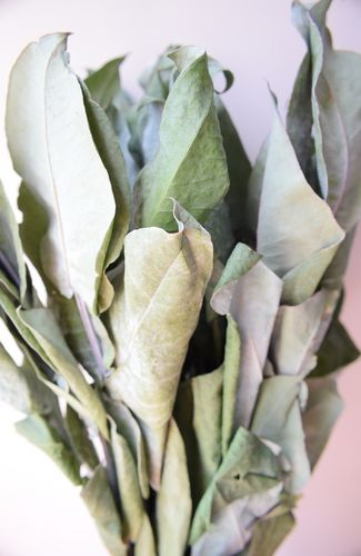 Dried foliage bunch - Eucalyptus robusta