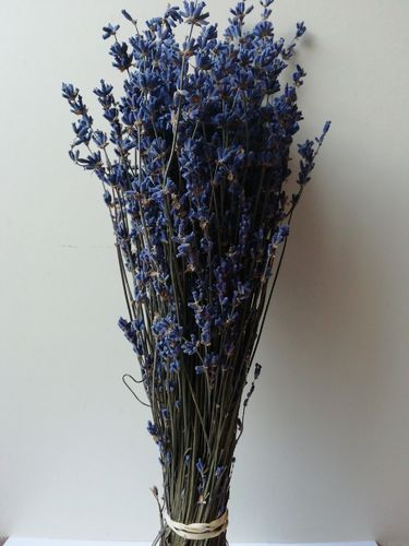 Dried English lavender bunches wholesale