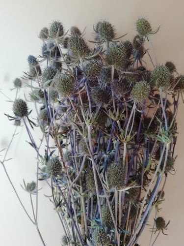 Eryngium thistle bunches dried natural blue wholesale