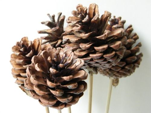 Natural pine cone picks wholesale