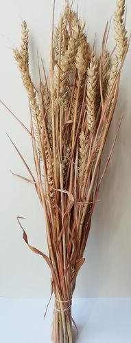 Dried wheat bunches sun bleached UK wholesale