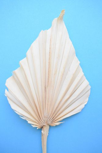Palm spear cream handmade dried leaf 7 pack
