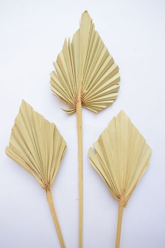 Palm spear natural stem small dried leaf multipack