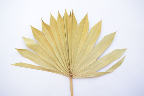 Palm sun small natural handmade dried leaf 7 pack