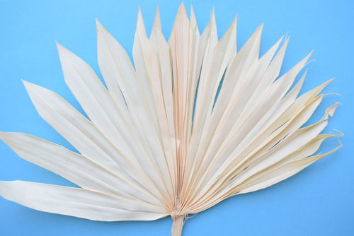 Palm sun cream dried leaf stem