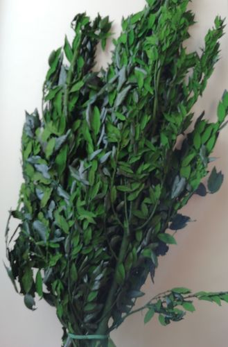 Preserved foliage bunch large - dyed green leaves