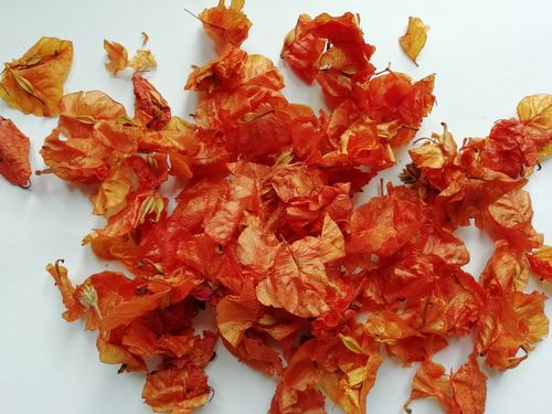 Bougainvillea petal confetti Orange