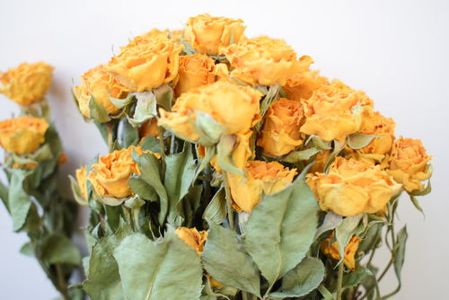 Yellow roses dried flower bunch