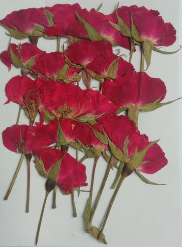 Pressed rose buds red pack of 20