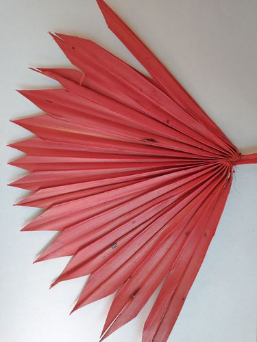 Palm sun red dried leaf stem for floristry