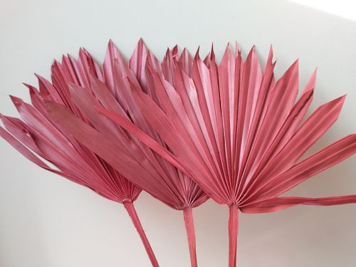 Palm sun red dried leaf stem for floristry 10 pack