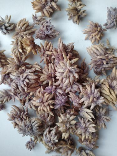 Star flowers for potpourri faded lavender colour