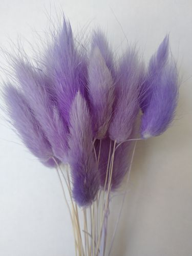 Small lagurus dried grass bunch lavender colour