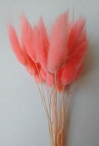 Small lagurus dried grass bunch flamingo pink